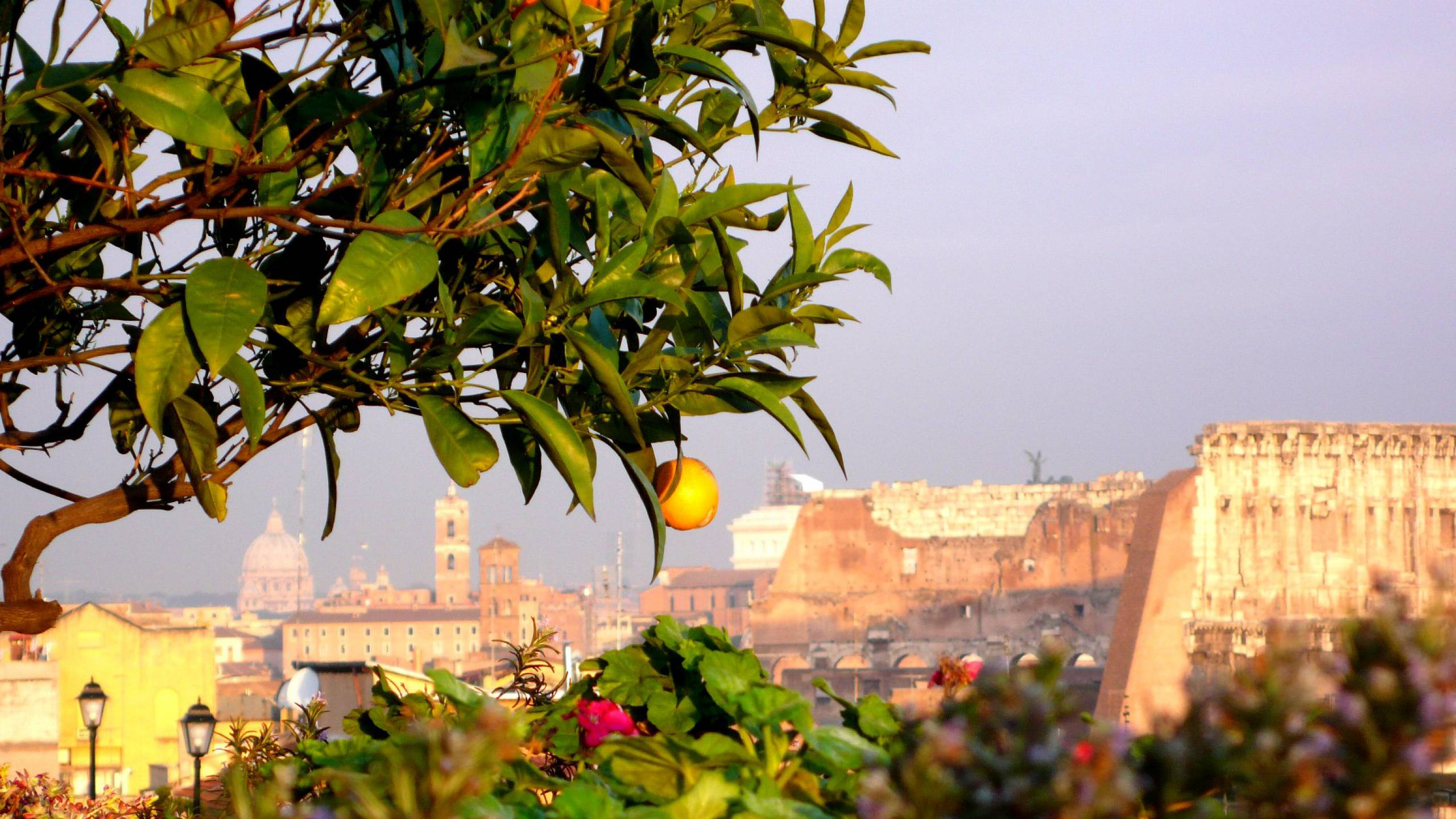 Colosseumview